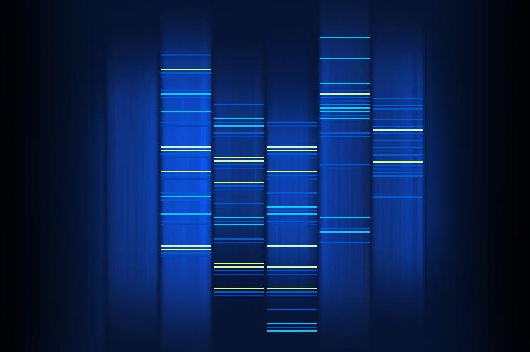 Blue strips with horizontal lines representing genetic markers